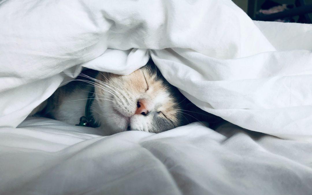 Slapen slaapprobleem slaapproblemen